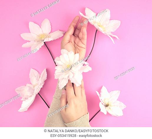 two female hands holding blooming white clematis buds on a pink background, fashionable concept for hand care, anti-aging care, spa treatments