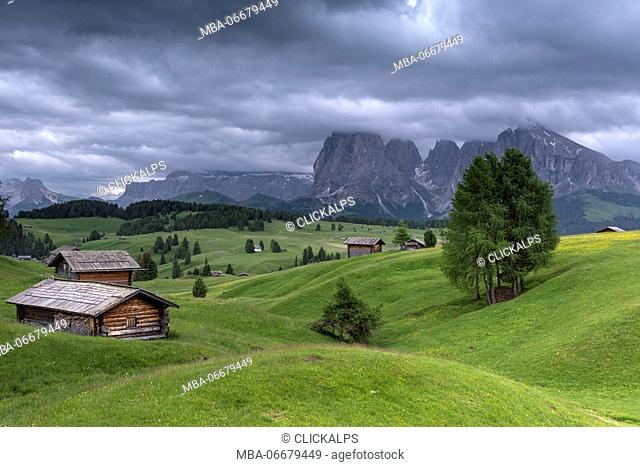 Alpe di Siusi/Seiser Alm, Dolomites, South Tyrol, Italy. View from the Alpe di Siusi to the peaks of Sella, Sassolungo/Langkofel and Sassopiatto/Plattkofel