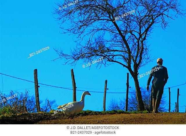 Farm landscape by Saint Antoine, Cantal, Auvergne, France