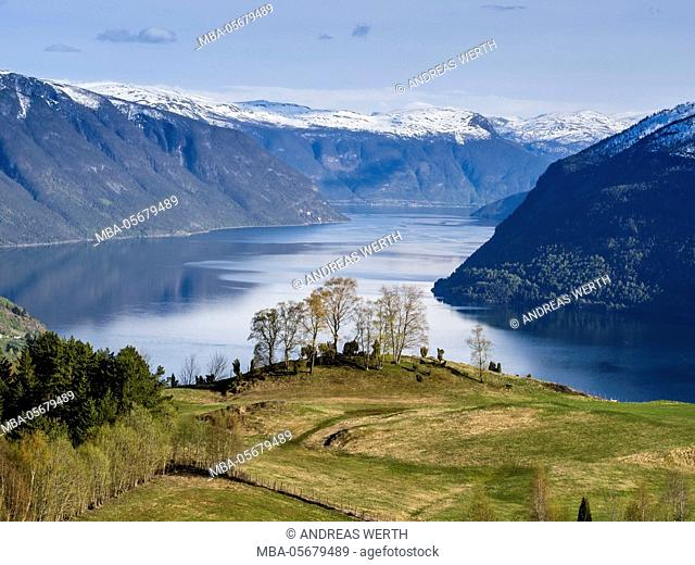 View over meadows and trees towards the Lustrafjord, the inner branch of the Sognefjord