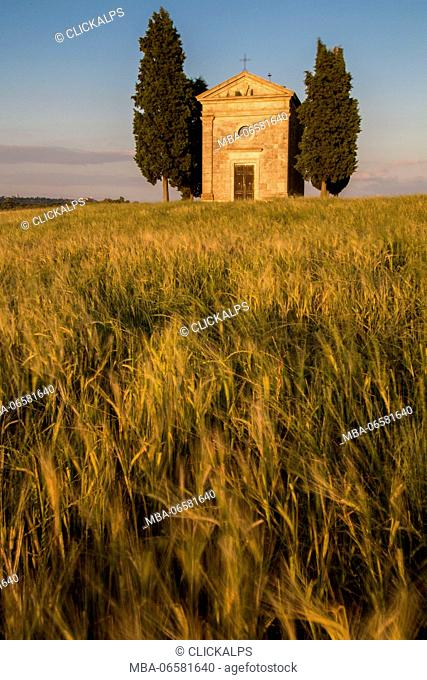 wheat in front of the chapel of Vitaleta in Val d'Orcia, tuscany, italy, europe