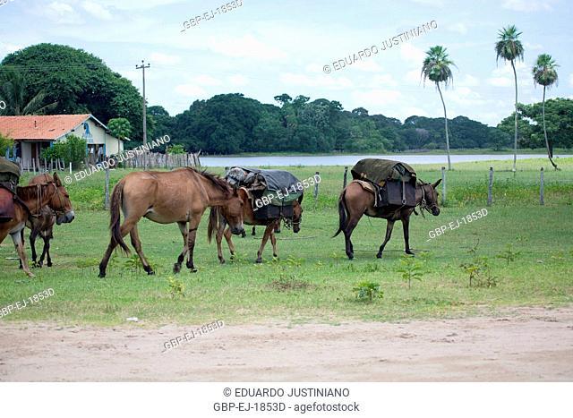 Transport Fishing net of the Cortege of Cattle, Corumbá, Mato Grosso do Sul, Brazil