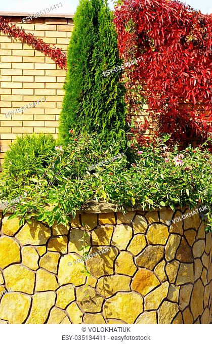 A wall Garden with cipress and bushes