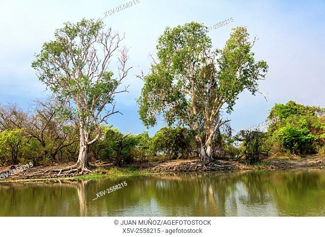 Yellow Water. Kakadu National Park. Northern Territory. Australia