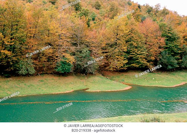 Reservoir and beeches. Irati forest. Navarra. Spain