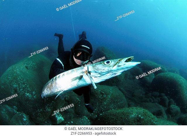 Spearfisher catching a big french barracuda in Azores, Portugal