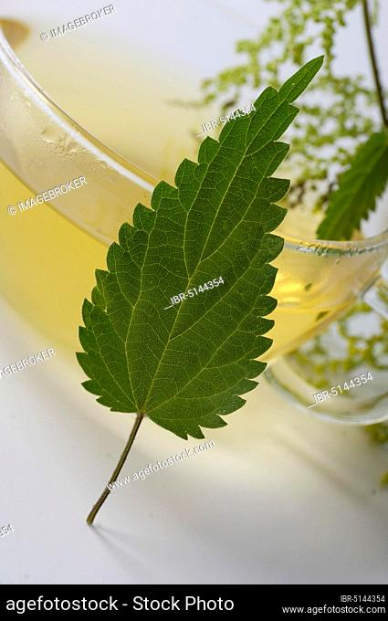 Cup with nettle tea and leaf (Urtica dioica)