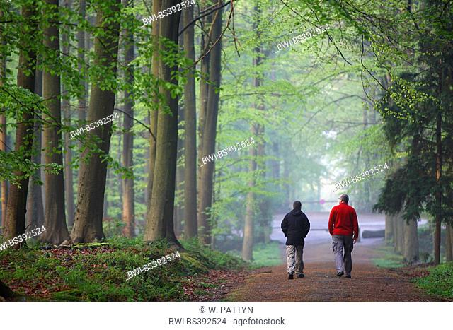 two walkers in beech forest, Belgium, Hallerbos