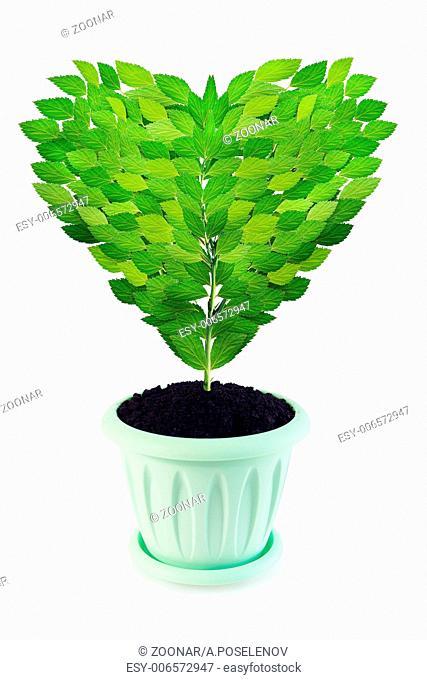 Sapling as a heart grows in a pot