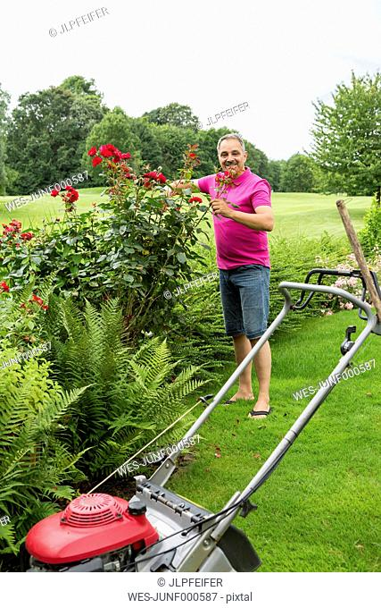 Smiling man caring for his roses in the garden