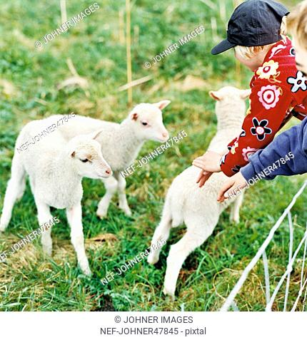 Children stroking lamb