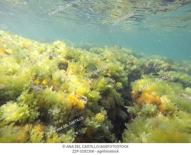 Underwater Las Rotas beach San Antonio cape nature reserve Denia Alicante Spain
