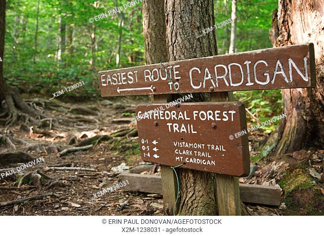 Trail junction of Cathedral Forest Trail and Holt Trail which climbs to the summit of Cardigan Mountain in Orange , New Hampshire USA  Cathedral Forest Trail is...