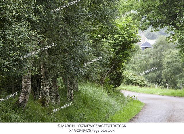 Road in Cairngorms National Park, Scotland, UK