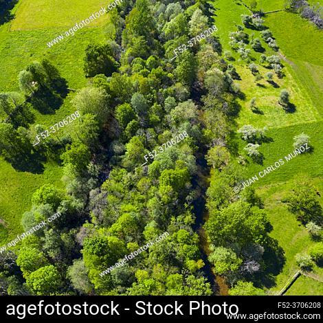 GALLERY FORESTS (Bosque de Ribera, Soto), Springtime, Ason river, Ramales, Cantabria, Spain, Europe