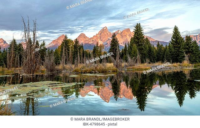 Mountains glow red at sunrise, Grand Teton Range mountain range mirrored in a small lake, Schwabacher Landing, Grand Teton National Park, Wyoming, USA
