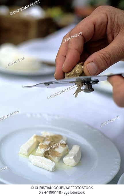 White truffle grated on Robiola cheese, La Casa del Trifulau, Costigliole d'Asti, province of Asti, Piedmont region, Italy, Europe
