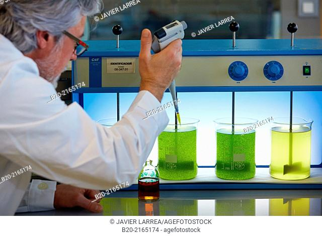 Flocculation tests. Precipitation of microalgae. Algae culture. Algae biofuel research. Organic Laboratory. Energy and Environment Division