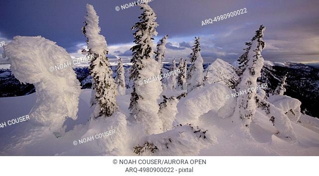 Frosted trees atop the ridge during winter