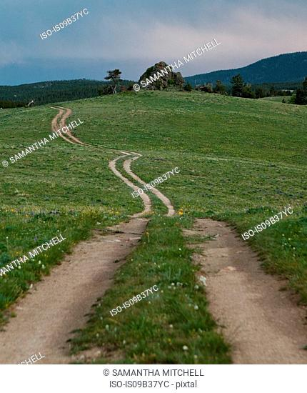 Track through field, Bighorn National Forest, Wyoming, USA