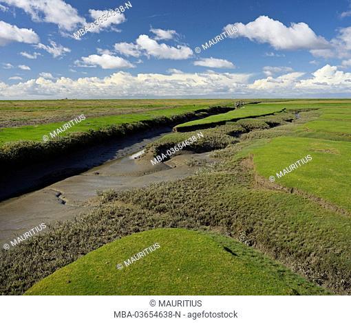 Salt meadows close the 'Hamburger Hallig', close Husum (capital), Schleswig - Holstein, Germany