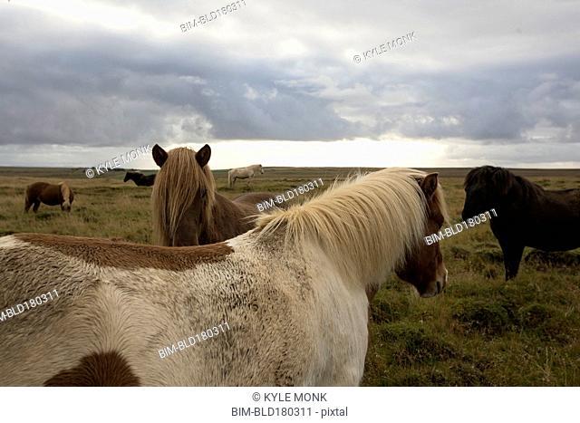 Herd of horses in rural field