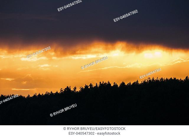 Rain Cloud Above Dark Black Silhouettes Of Forest Trees Woods During Beautiful Vibrant Sunset Sunrise. Natural Colors Of Evening Sky