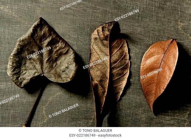 Still of autumn leaves, dark wood background, fall image