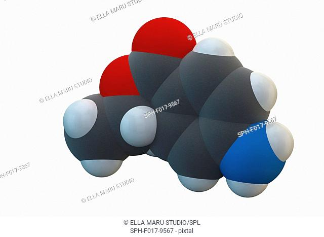 Benzocaine local anesthetic drug molecule. Chemical formula is C9H11NO2. Atoms are represented as spheres: carbon (grey), hydrogen (white), nitrogen (blue)