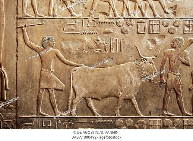 Two men with an ox, relief, Mastaba of Akhethotep, Necropolis of Saqqara, Memphis (UNESCO World Heritage List, 1979), Egypt