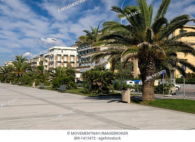 Palms on the beach promenade, Lido di Camaicre resort, Versilia, Riviera, Tuscany, Italy, Europe