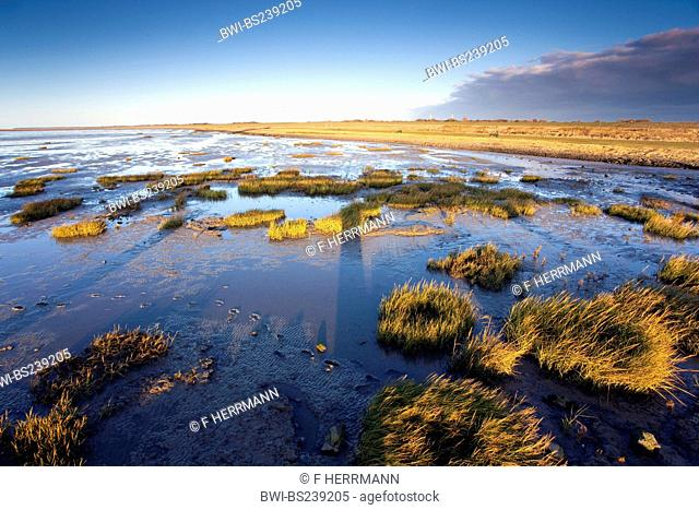 tidelands at low tide with islands of grass at sunset, Germany, Lower Saxony, Dorum-Neufeld