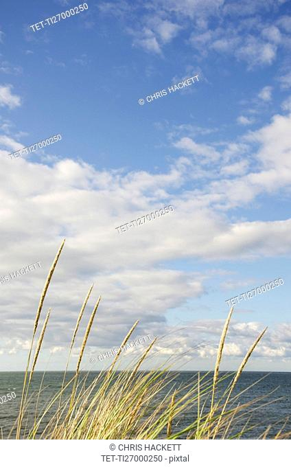Cape Cod seascape with marram grass in sunlight