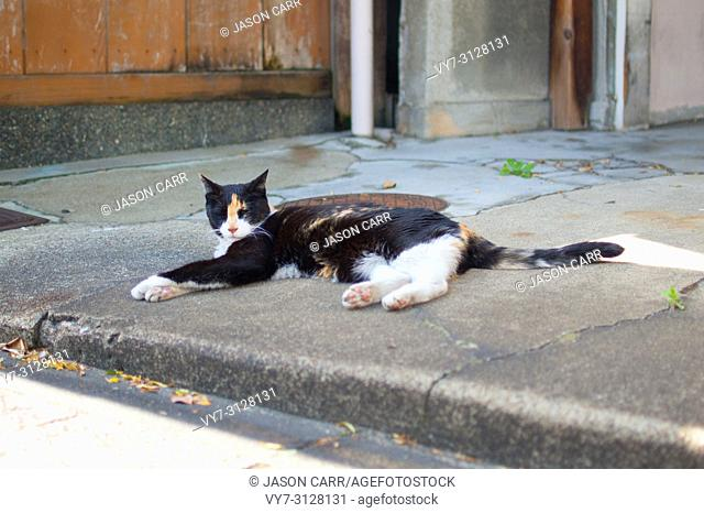 Cat taking a nap on the street of Kyoto, Japan. Kyoto is themed with the Japanese traditional atmosphere from long time ago