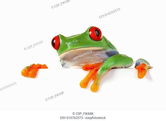 Green frog closeup!
