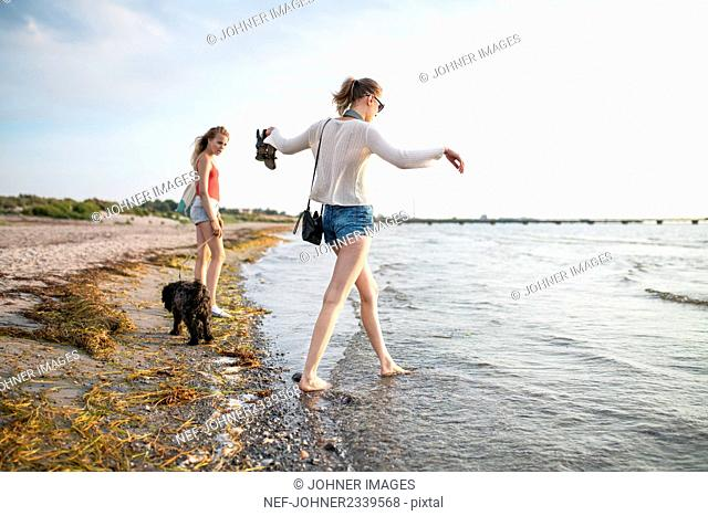 Young women walking with dogs on beach