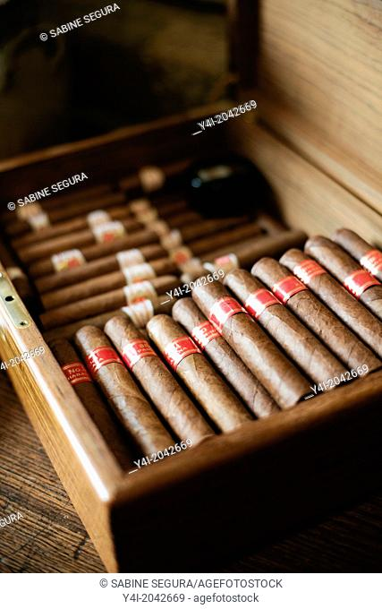 Cigars Partagas Serie D4. La Tupina. The greedy street. Bordeaux. Gironde. Aquitaine. France. Europe