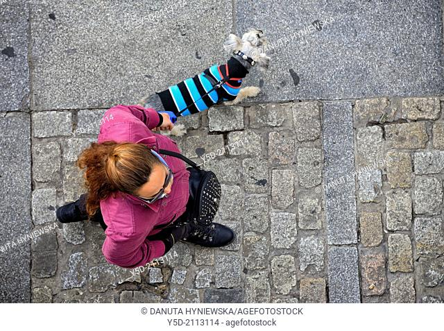 Schnauzer miniature in warm sweater walking on the leash, paved street of Cadiz, actually temperature was 23 Celsius degrees, Andalusia, Spain