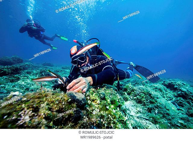 Scuba divers exploring sea life, Adriatic Sea, Dalmatia, Croatia