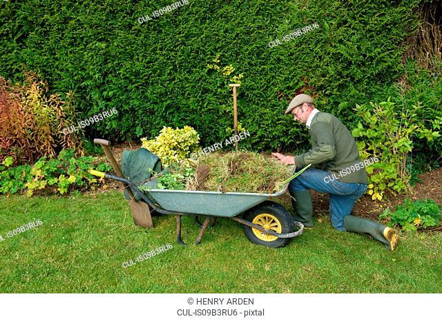 Mature man kneeling by wheelbarrow gardening