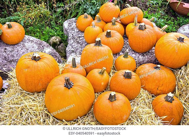 Pumpkins on diplay at a farmer's market