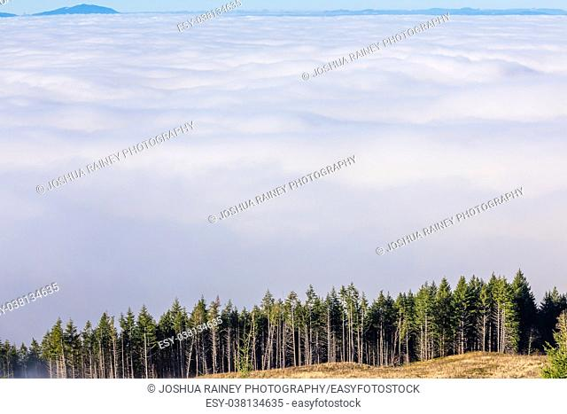 Trees and a mountain in a landscape image of the Coburg Hills and Willamette Valley completely covered in low lying clouds and fog during the Winter