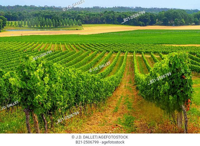 Bergerac wines area, by Carsac de Gurson, Dordogne, Aquitaine, France