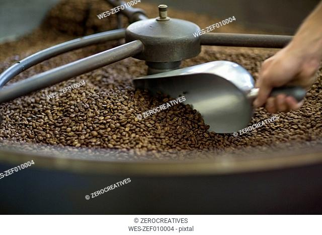 Rasted coffee beans in cooling cylinder