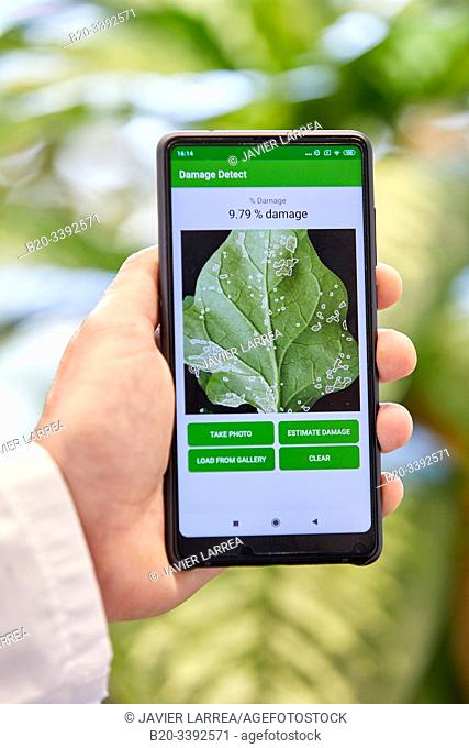 App development to detect and quantify plant damage, Agricultural industry, Technology Centre, Tecnalia Research & Innovation, Derio, Bizkaia, Basque Country
