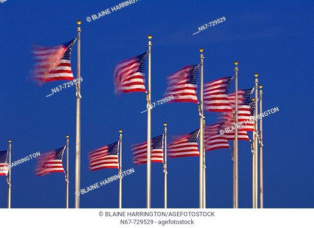 A row of American flags that encircle the Washington Monument blow in predawn light, Washington D C , U S A