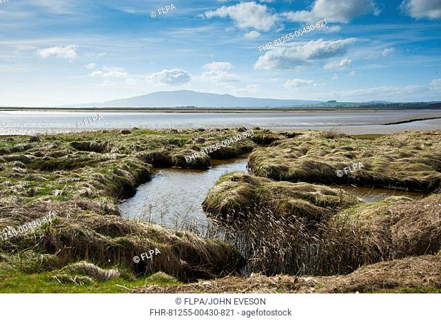 View of estuary habitat, Solway Firth, Caerlaverock National Nature Reserve, Ruthwell, Dumfries and Galloway, Scotland, march