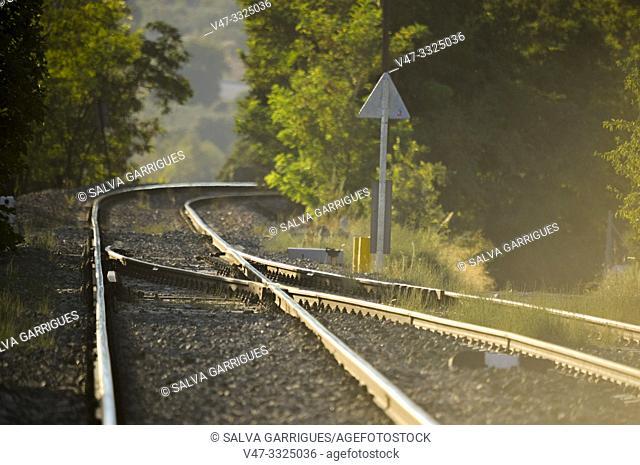 crossing train rails at sunset