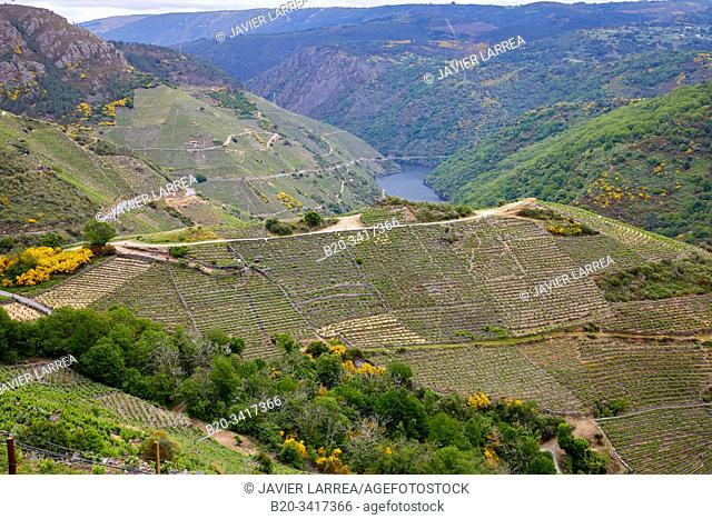 Vineyards, Ribeira Sacra, Heroic Viticulture, Sil river canyon, Doade, Sober, Lugo, Galicia, Spain