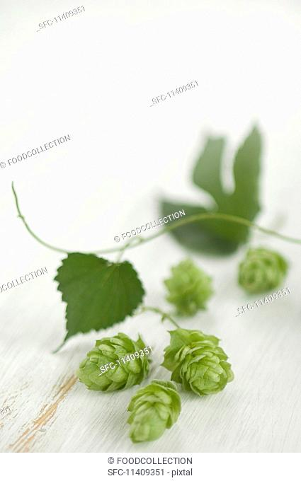 Hops, umbers and leaves on a wooden surface